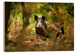 Wood print  Boar in the deciduous forest - David Slater