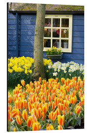 Aluminium print  Tulips in the Keukenhof in Lisse - Jim Engelbrecht