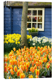 Canvas  Flowers in the garden of Keukenhof in Lisse - Jim Engelbrecht