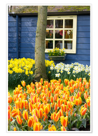 Premium poster  Tulips in the Keukenhof in Lisse - Jim Engelbrecht