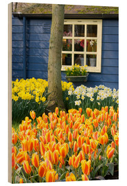 Wood print  Tulips in the Keukenhof in Lisse - Jim Engelbrecht