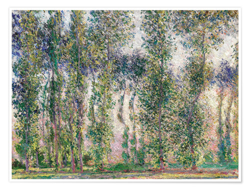 Premium poster Poplars at Giverny
