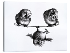 Canvas print  Three owls - Stefan Kahlhammer