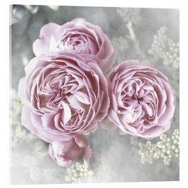 Acrylic print  Roses in shabby style - Christine Bässler