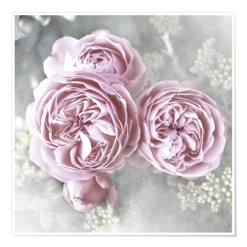 Premium poster Roses in shabby style