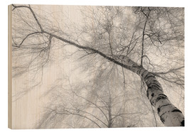 Wood print  Birch in the fog - Hannes Cmarits