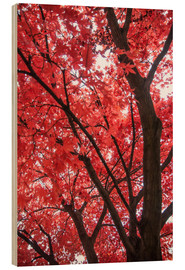 Wood print  Japanese maple - Hannes Cmarits