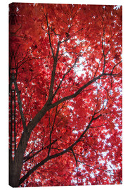 Canvas print  Fire red - Hannes Cmarits