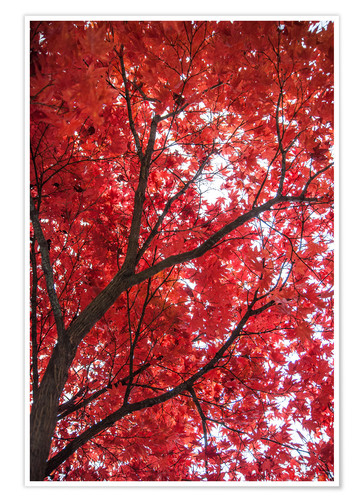 Premium poster Fire red