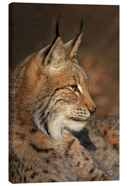 Canvas  lynx - Wolfgang Dufner
