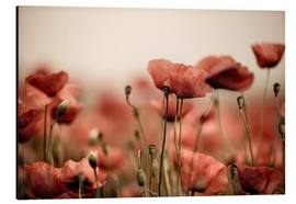 Aluminium print  Red poppy flowers 05 - Nailia Schwarz