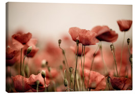 Canvas  Red Poppy Flowers 05 - Nailia Schwarz