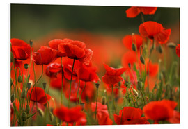 Forex  Red Poppy Flowers 14 - Nailia Schwarz