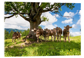 Acrylic print  Young Cows - Jan Schuler
