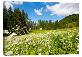 Canvas print  Alpine Meadows - Jan Schuler