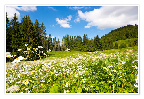 Premium poster Alpine Meadows