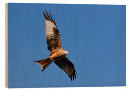 Wood print  Red Kite - Bieberchen