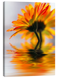 Canvas  Gerbera water melody - Renate Knapp Waldundwiesenfee
