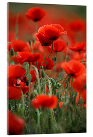 Acrylic glass  Poppy Meadow - Nailia Schwarz