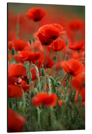 Alu-Dibond  Poppy Meadow - Nailia Schwarz