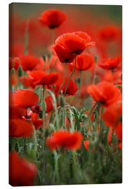 Canvas print  Poppy Meadow - Nailia Schwarz