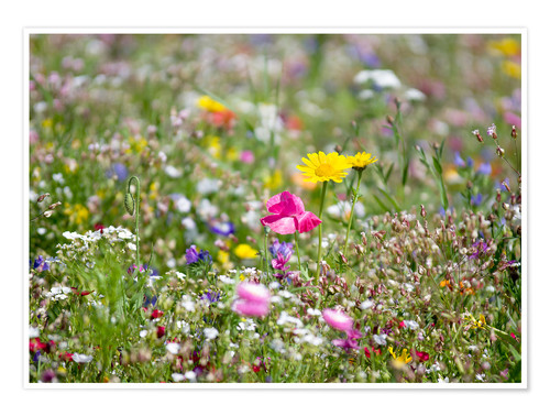 Premium poster Summer Meadow 2