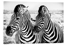 Acrylic glass  Two Zebras - Jan Schuler
