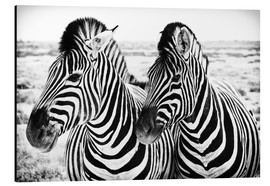 Alu-Dibond  Two Zebras - Jan Schuler