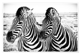 Premium poster  Two Zebras - Jan Schuler