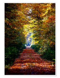 Premium poster  Forest away - Renate Knapp