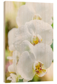 Wood  White Orchid - Suzka