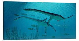 Canvas print  Three Plesiosaurus dinosaurs migrate with a school of fish. - Corey Ford