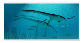 Premium poster Three Plesiosaurus dinosaurs migrate with a school of fish.