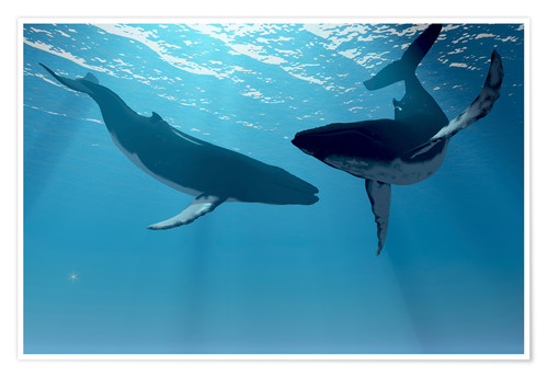 Premium poster Two humpback whales, digital