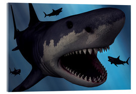 Acrylic print  A Megalodon shark from the Cenozoic Era - Mark Stevenson