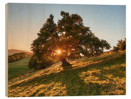 Wood print  Sun Tree - Michael Breitung