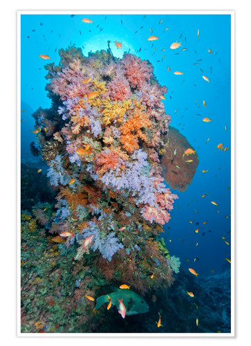 Premium poster Colourful reef scene