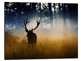 Aluminium print  Red deer in the subtle light - Alex Saberi