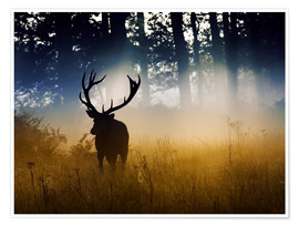 Poster  A red deer in the woods - Alex Saberi