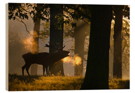 Wood print  Roaring red deer in the forest - Alex Saberi
