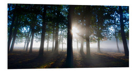 Foam board print  Forest in morning mist - Alex Saberi