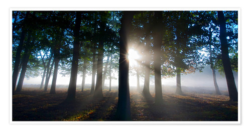 Premium poster Forest in morning mist