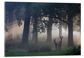Acrylic print  Two red deer in a clearing - Alex Saberi