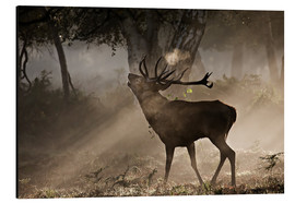 Aluminium print  Deer in the forest - Alex Saberi