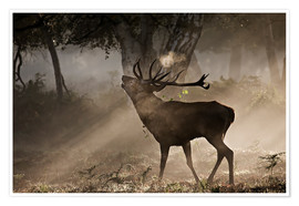 Premium poster  Deer in the forest - Alex Saberi