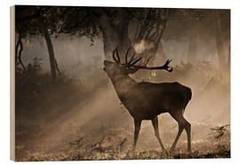 Wood print  Deer in the forest - Alex Saberi