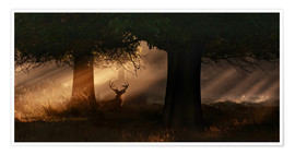 Poster The silhouette of a Roth Irschs, Cervus elaphus, in the morning in the autumn mist