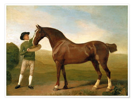Premium poster Groom feeding a bay hunter in a landscape