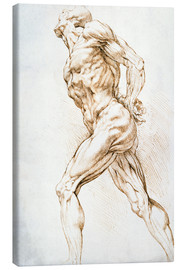 Peter Paul Rubens - Anatomical study