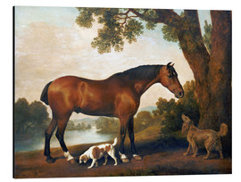 Alu-Dibond  Horse and two dogs - George Stubbs